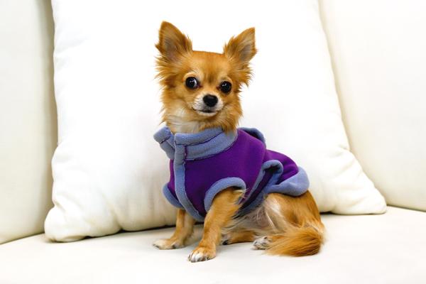 Schnittmuster des Monats: Hundemantel, Burda 7752
