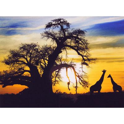 Fotoprint Giraffe
