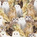 Cotton Digital Owl
